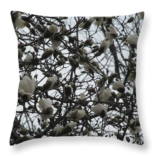 Flower Throw Pillow featuring the photograph Cloudy Day For Young Magnolias by Tina M Wenger