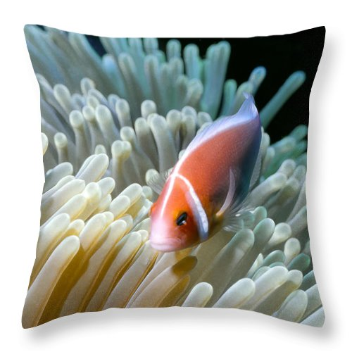 Micronesia Throw Pillow featuring the photograph Clownfish 9 by Dawn Eshelman