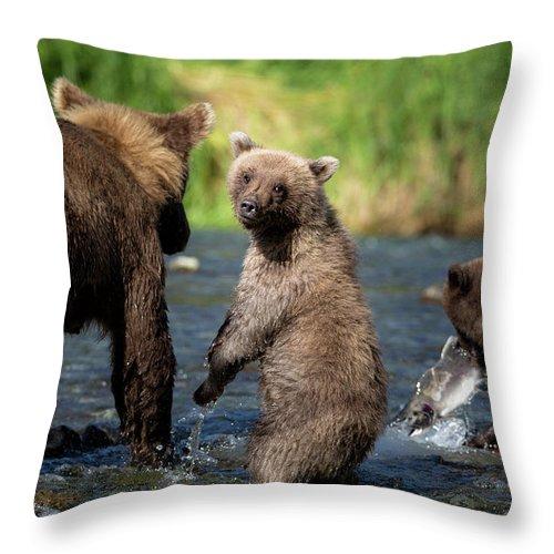 Katmai Peninsula Throw Pillow featuring the photograph Coastal Brown Bear Family by Justinreznick