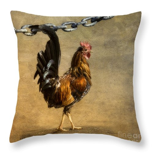 St. Croix Throw Pillow featuring the photograph Cock Of The Walk by Betty LaRue
