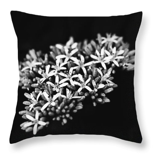 Agriculture Throw Pillow featuring the photograph Coffee Bean by Joel Bourgoin