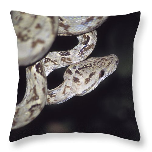 Snake Throw Pillow featuring the photograph Coiled And Waiting by James Brunker