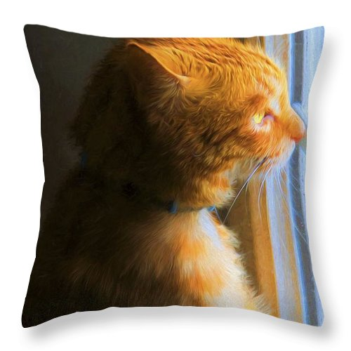 Cat Throw Pillow featuring the photograph Colekitty On The Lookout by Alice Gipson