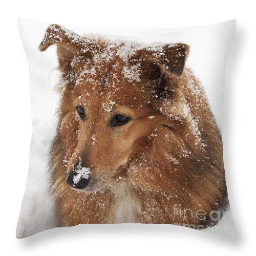 Collie Throw Pillow featuring the photograph Collie In The Snow by Jeannette Hunt