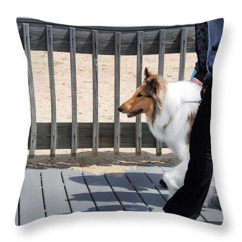 Collie Throw Pillow featuring the photograph Collie Walk by Karen Lambert