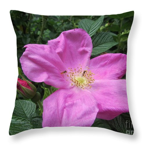 Rose Throw Pillow featuring the photograph Colonial Rose - Floral by Susan Carella