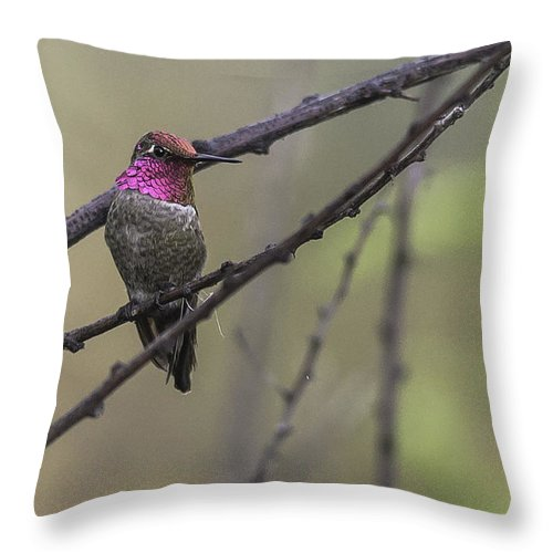 Gwp Throw Pillow featuring the photograph Color On A Branch by Lorraine Harrington