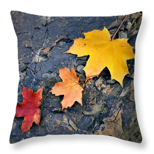 Outdoor Throw Pillow featuring the photograph Colored Maple Leaf On Stone by Jozef Jankola