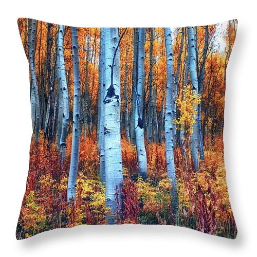 Aspens Throw Pillow featuring the photograph Colorful Aspens by Brian Kerls