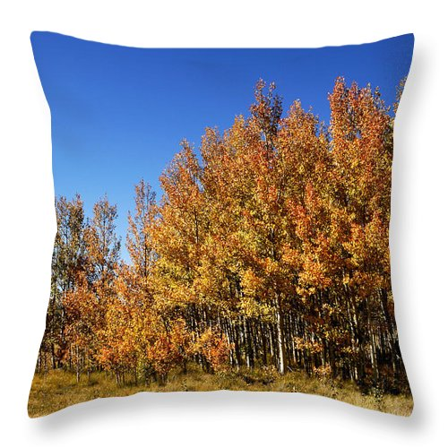 Colorful Throw Pillow featuring the photograph Colorful Colorado by Marilyn Hunt