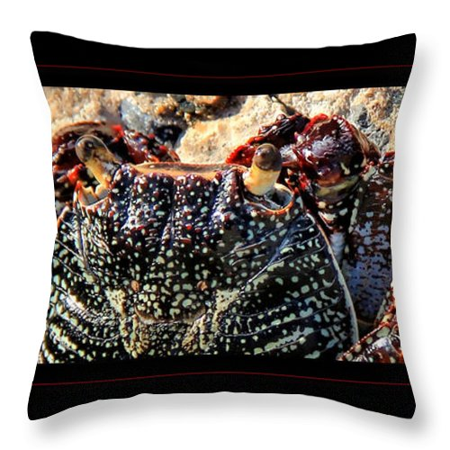 Crab Canvas Print Throw Pillow featuring the photograph Colorful Crab by Lucy VanSwearingen