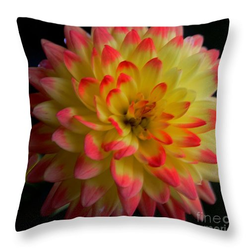 #dahlia #flower Throw Pillow featuring the photograph Colorful Dahlia by Kathleen Struckle