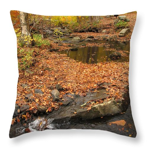 Fall Throw Pillow featuring the photograph Colorful Forest by Dave Mills