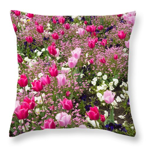 Flowers Throw Pillow featuring the photograph Colorful Pink Tulips And Other Flowers In Spring by Matthias Hauser