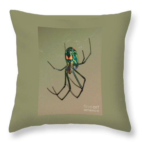 Spider Throw Pillow featuring the photograph Colorful Spider In The Swamp by Carol Groenen