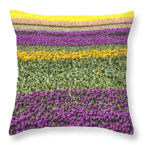 Closeup Throw Pillow featuring the photograph colorful tulips in Holland by Patricia Hofmeester