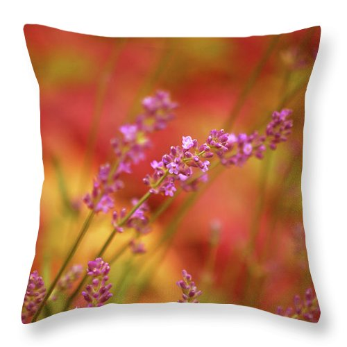 Flowers Throw Pillow featuring the photograph Colors I Love by Lori Tambakis