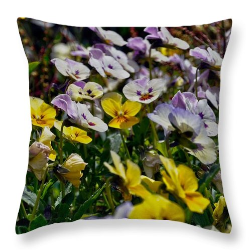Flower Colors Nature View Beatiful Throw Pillow featuring the photograph Colors Of Flower by Stefan Pettersson
