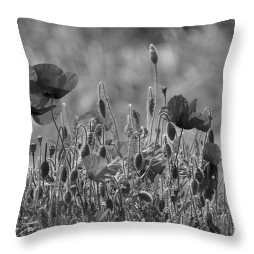 Poppies Throw Pillow featuring the photograph Colour Blind Poppies 2 by Carol Lynch