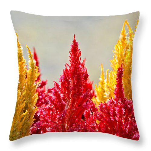Throw Pillow featuring the photograph Colourful Plants by Cheryl Baxter