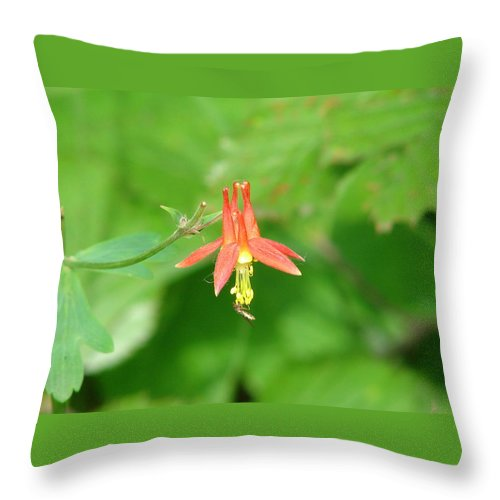Flower Throw Pillow featuring the photograph Columbine 2 by Lew Davis