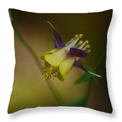 Wild Columbine Throw Pillow featuring the photograph Columbine by Ian Ashbaugh