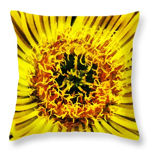 Come Closer Throw Pillow featuring the photograph Come A Little Closer by Steve Taylor