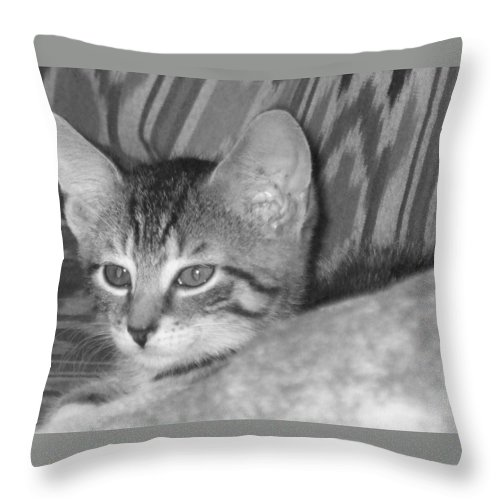 Kitten Throw Pillow featuring the photograph Comfy Kitten by Pharris Art