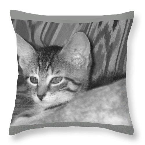 Kitten Throw Pillow featuring the photograph Comfy Kitten by Pharris Art