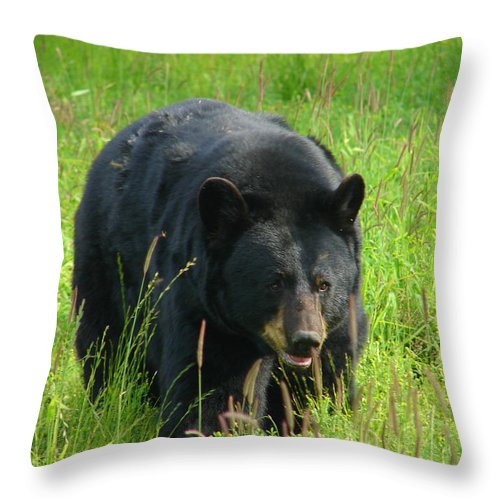 Animal Throw Pillow featuring the photograph Comin' At Cha by Lew Davis