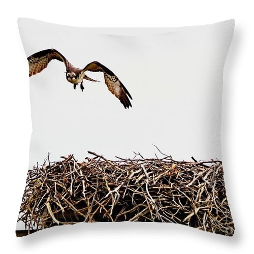 Osprey Throw Pillow featuring the photograph Coming Home by Sharon Woerner