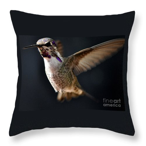 Anna Throw Pillow featuring the photograph Coming In For A Landing by Jay Milo