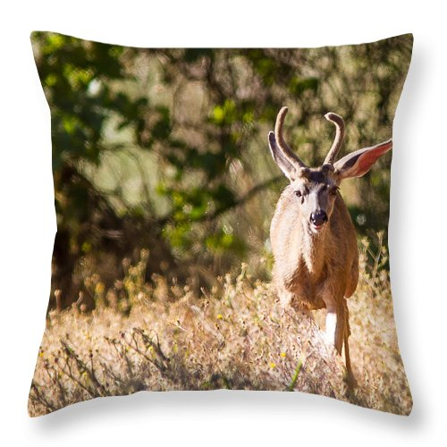 Deer Spikes Bucks Outdoors Wildlife Nature Wooded Area All Prints Are Available In Prints Throw Pillow featuring the photograph Coming Right At Me by Brian Williamson