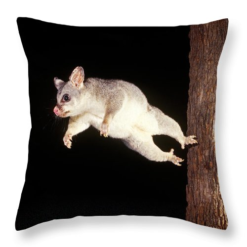 Animal Throw Pillow featuring the photograph Common Brush-tailed Possum by BG Thomson