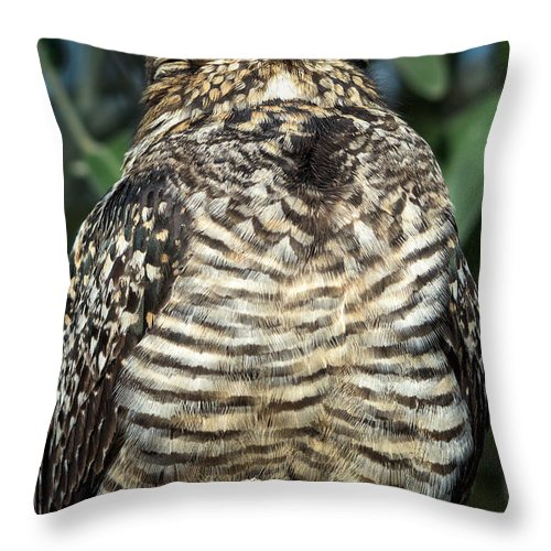 Common Throw Pillow featuring the photograph Common Nighthawk Napping by Kathleen Bishop