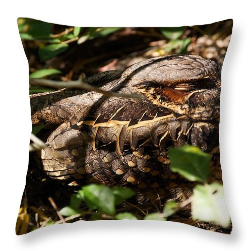 Common Pauraque Throw Pillow featuring the photograph Common Pauraque by Stuart Litoff