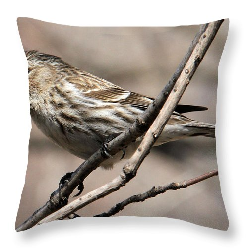 Common Redpoll Throw Pillow featuring the photograph Common Redpoll by Doris Potter