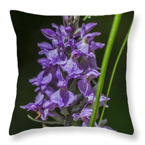 Common Spotted Orchid Throw Pillow featuring the photograph Common Spotted Orchid by Steve Purnell