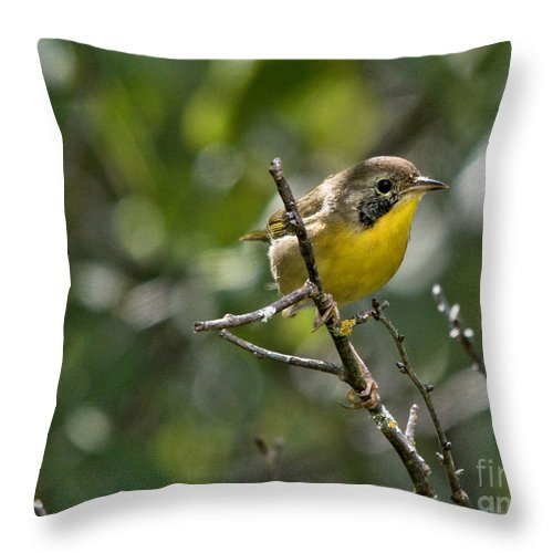 Common Yellowthroat Throw Pillow featuring the photograph Common Yellowthroat Warbler by Cheryl Baxter