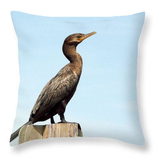 Cormorant Throw Pillow featuring the photograph Comorant And Blue Sky by Robert Brown