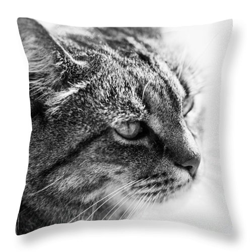 Cat Throw Pillow featuring the photograph Concentrating Cat by Hakon Soreide