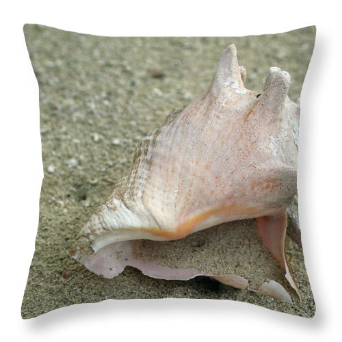 Conch Throw Pillow featuring the photograph Conch by Debby Richards
