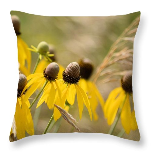 Yellow Throw Pillow featuring the photograph Cone Flower 8340 by Bonfire Photography