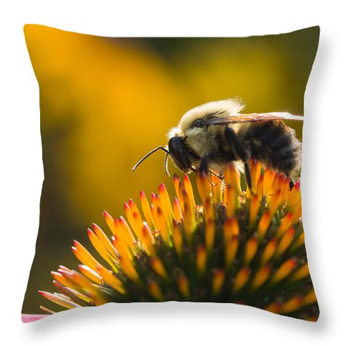 Flower Throw Pillow featuring the photograph Cone Flower And Bee by Selim Tuzun