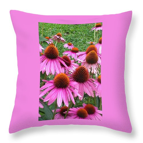 Flower Throw Pillow featuring the photograph Cone Flowers 2 by Lew Davis