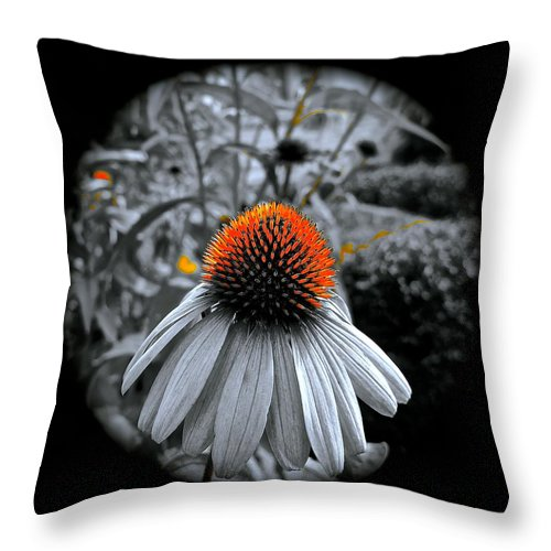 Coneflower Throw Pillow featuring the photograph Coneflower Gold by Tim G Ross