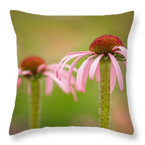 Coneflower Throw Pillow featuring the photograph Coneflower Pair by Lindley Johnson