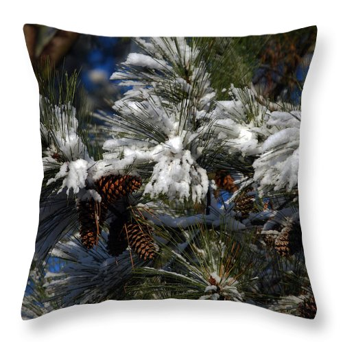 Pine Throw Pillow featuring the photograph Cones by Skip Willits