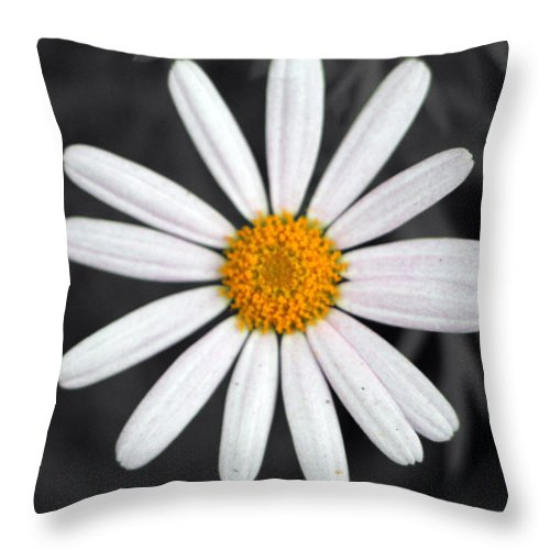 Black Throw Pillow featuring the photograph Connection by Munir Alawi