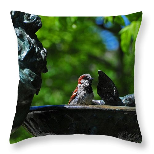 Bird Throw Pillow featuring the photograph Considering A Bath by Mike Martin